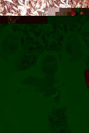 bumpgrindfork0917-5814
