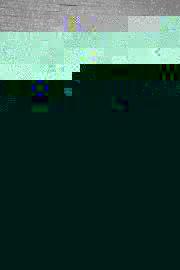 bumpgrindcore0815-337
