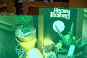 heavyfeatherplantshop1218-4902