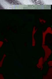 nocturna0219-9425